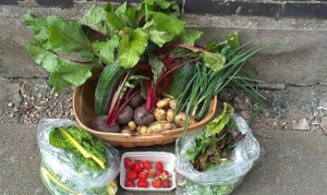 Five Acre Vegetables