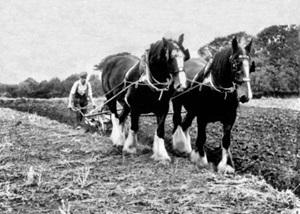 Farming 1914