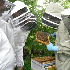Bee Training
